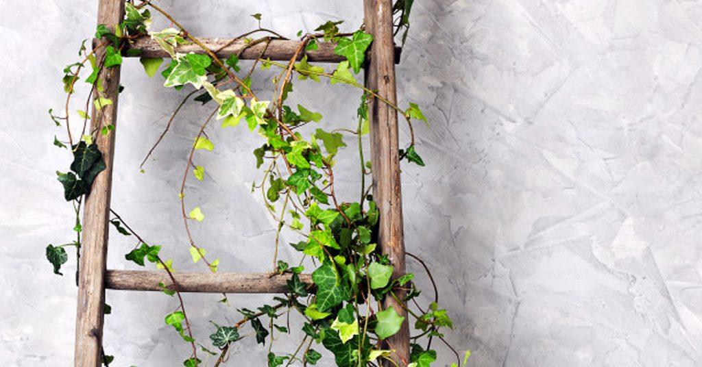 ¿Se dañó la escalera? Es perfecta para hacer un jardín vertical casero