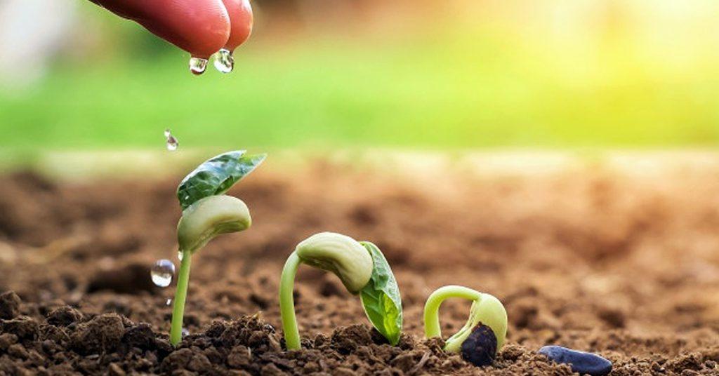 Beneficios de los servicios ecosistémicos