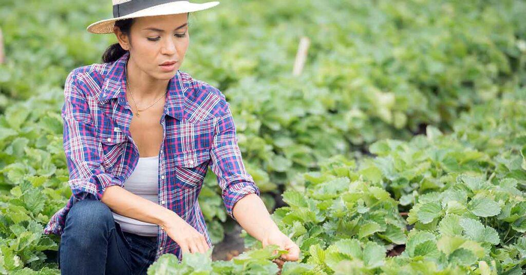 Nuevos empleos verdes ¿Qué son?