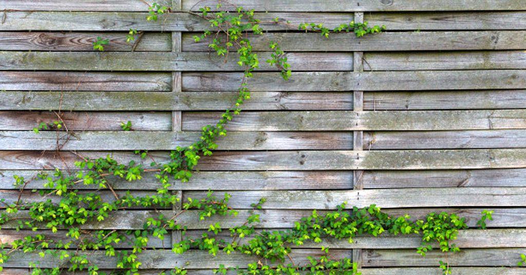 Razones para hacer un jardín vertical casero