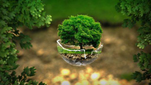 Actividades ecológicas para la escuela