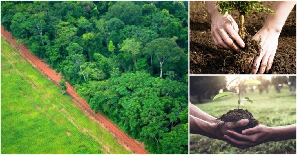 Reforesta y aléjate de los países que más contaminan