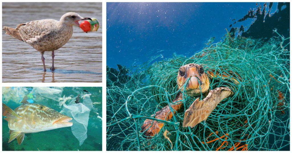 Humanos comiendo plástico y animales también