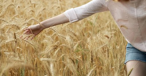 Beneficios de consumir salvado de trigo