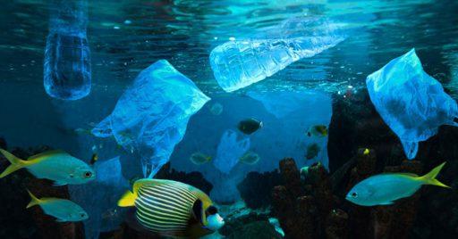 ¿Cómo nos afectan la islas de plástico?