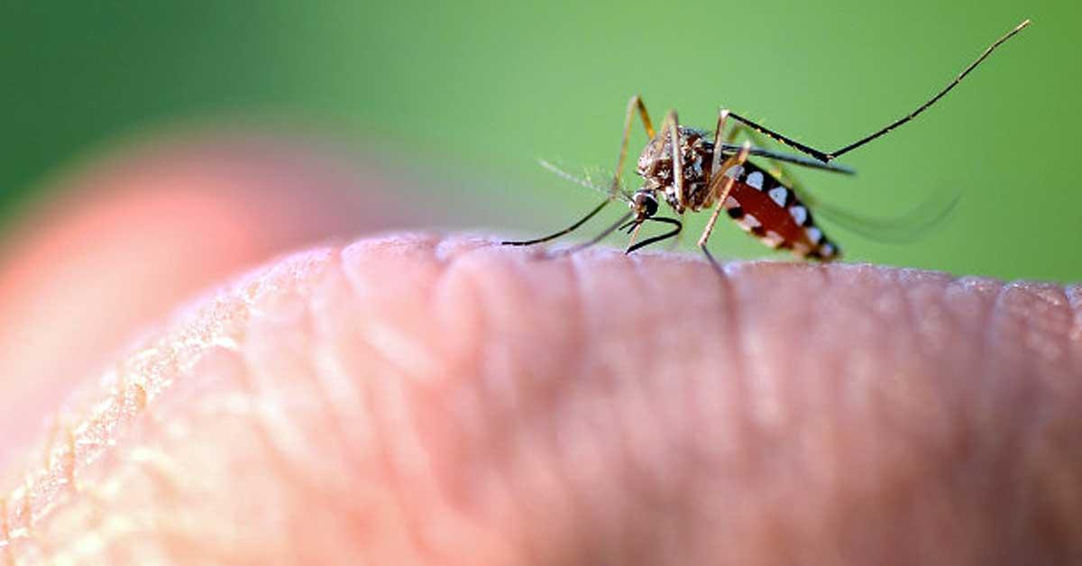 Pożegnaj się z ugryzieniami z tymi komarami
