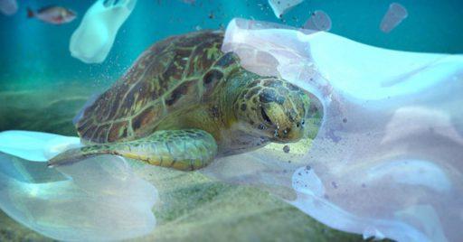Efectos desastrosos de las islas de plástico
