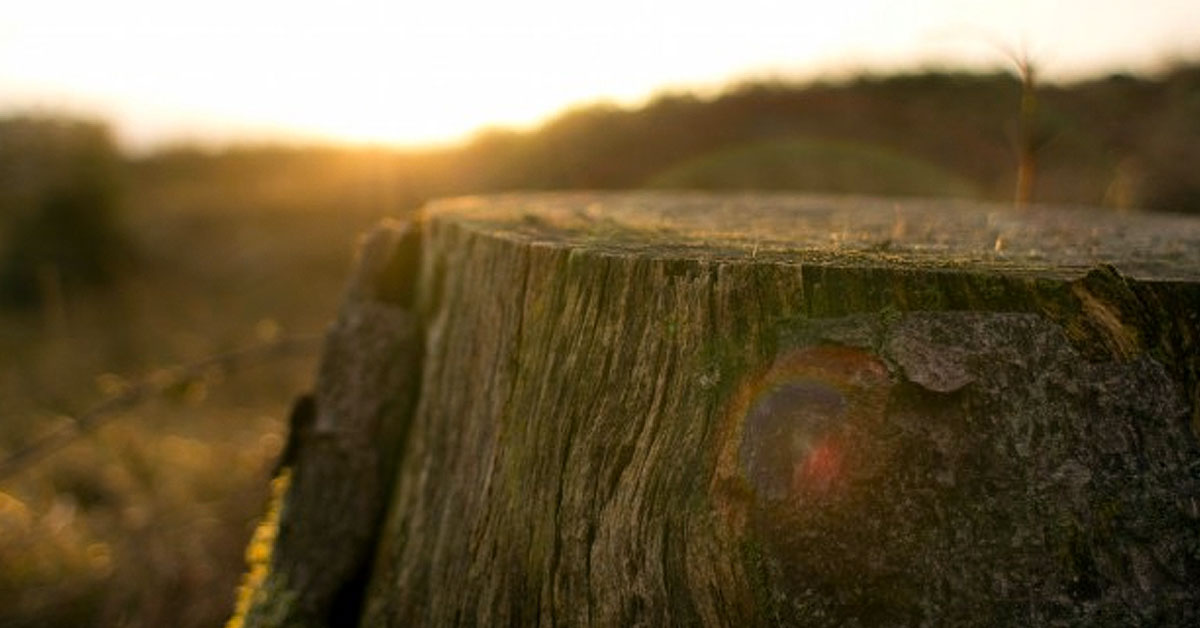 Efectos globales de la deforestación y cómo revertirlos