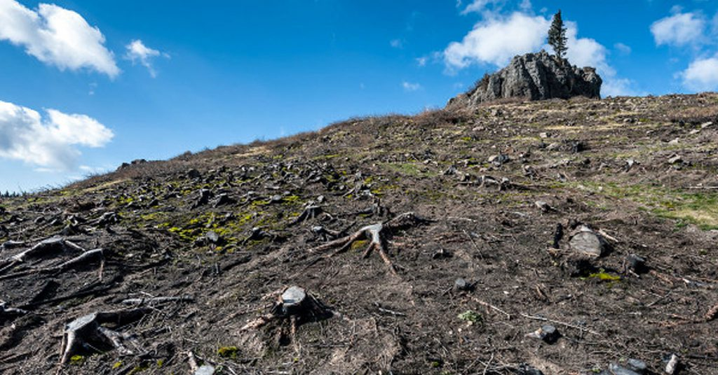 Ideas para detener la deforestación