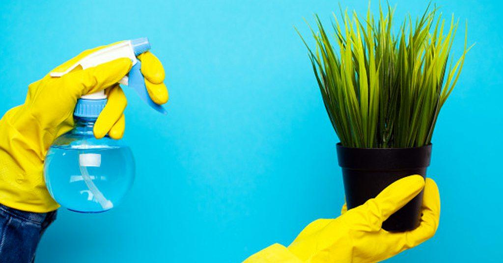Métodos caseros para regar las plantas en vacaciones