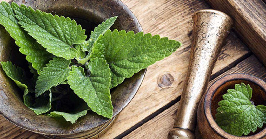 Melisa: directo de la mesa de aromaterapia