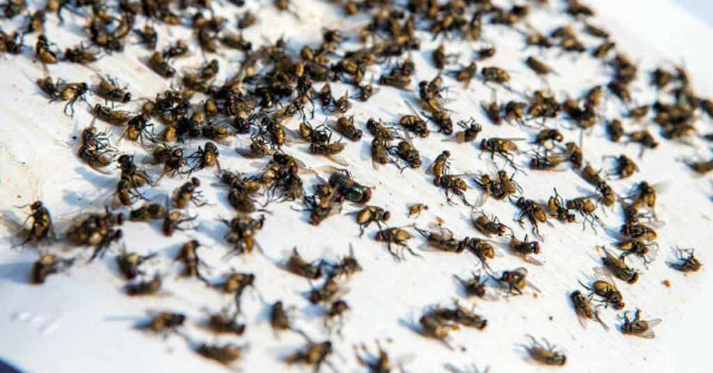 Papel como trampas para moscas