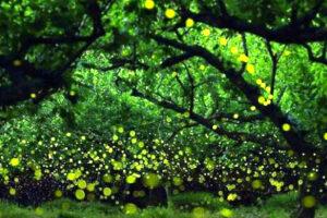 Les plantes luminescentes : l'avenir de l'éclairage