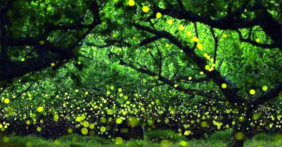 Plantas bioluminiscentes: el futuro de la iluminación