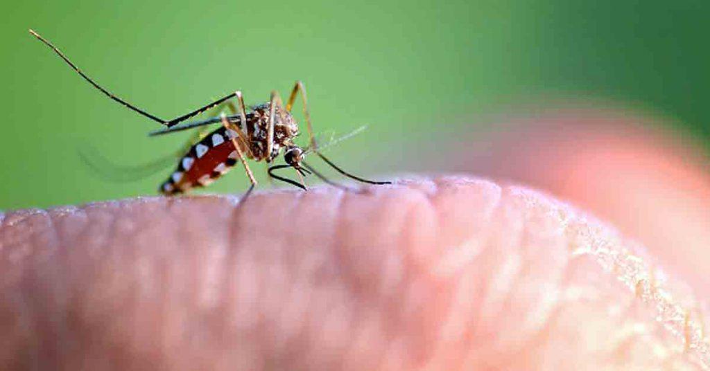 ¿Por qué me pican los mosquitos?