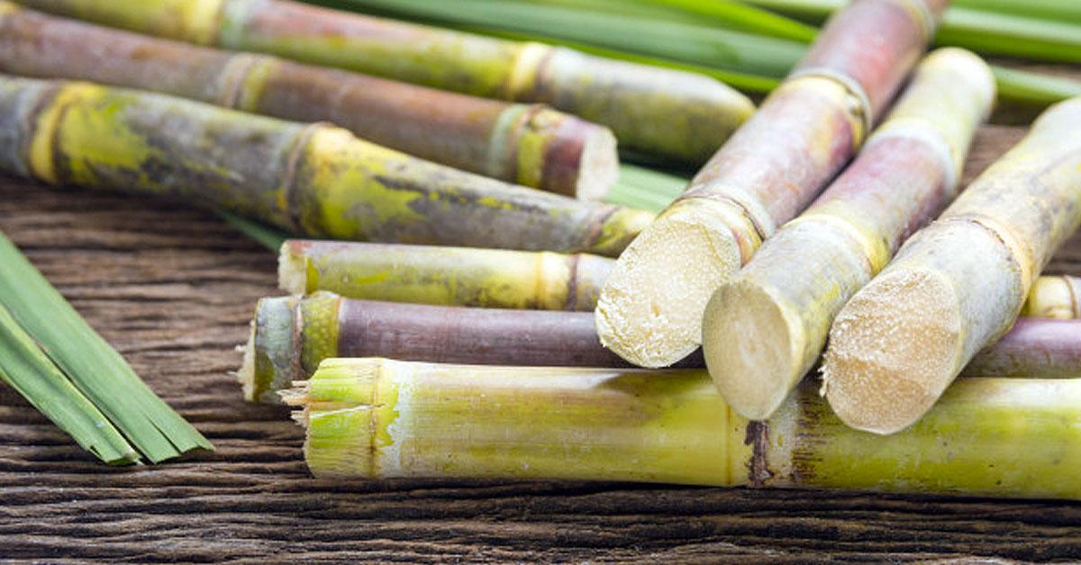 Propiedades y beneficios de la caña de azúcar