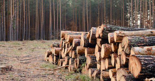 ¿Qué es la deforestación?