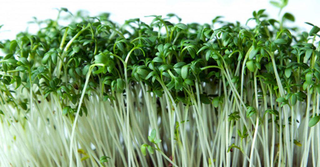 Razones por las que los clientes prefieren un restaurante ecológico