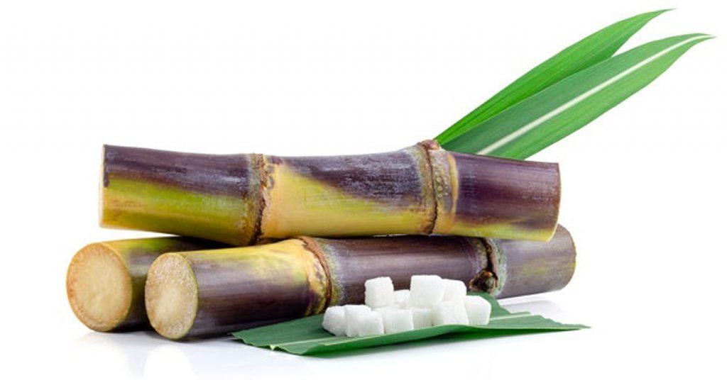 Usos de la caña de azúcar