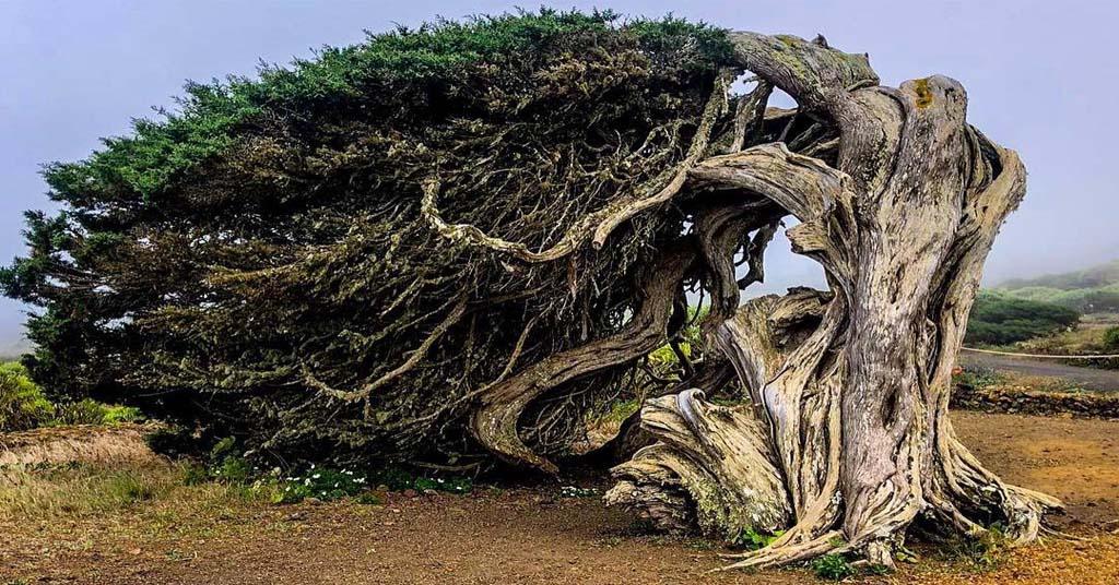 árboles-más-famosos-y-bonitos-del-mundo-cuerpo