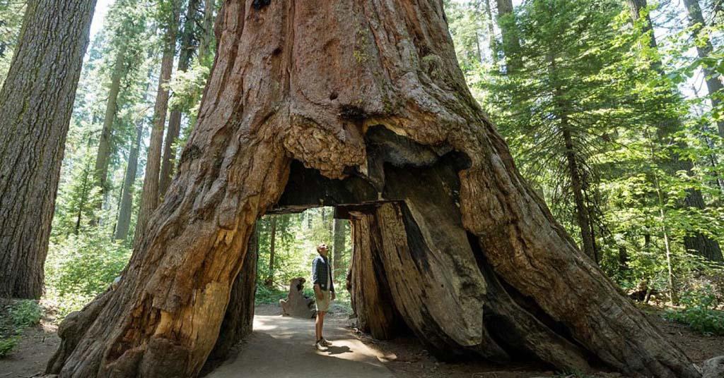 árboles-más-famosos-y-bonitos-del-mundo-portada