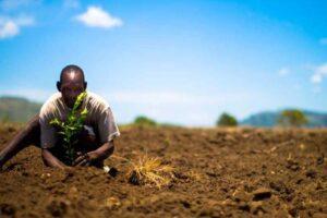Como plantar uma árvore?