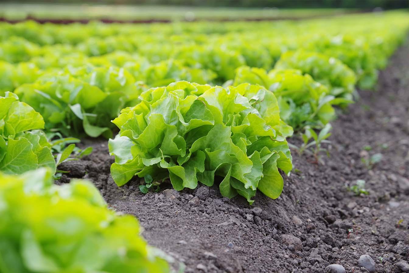 agricultura ecológica y agroecología