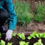 ¿Es lo mismo agricultura ecológica y agroecología?