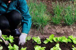 Será a agricultura biológica e a agro-ecologia a mesma coisa?