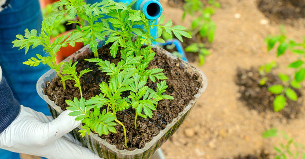 9 formas de regar las plantas en vacaciones
