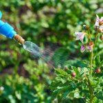 Fabriquer un insecticide maison, facile et simple !