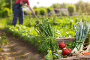 Para que serve a agricultura biológica?