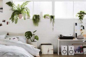 Plantas de purificação do ar, quais são elas e quais são os seus benefícios?